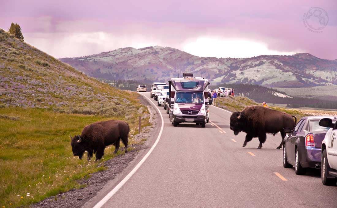 como llegar a Yellowstone