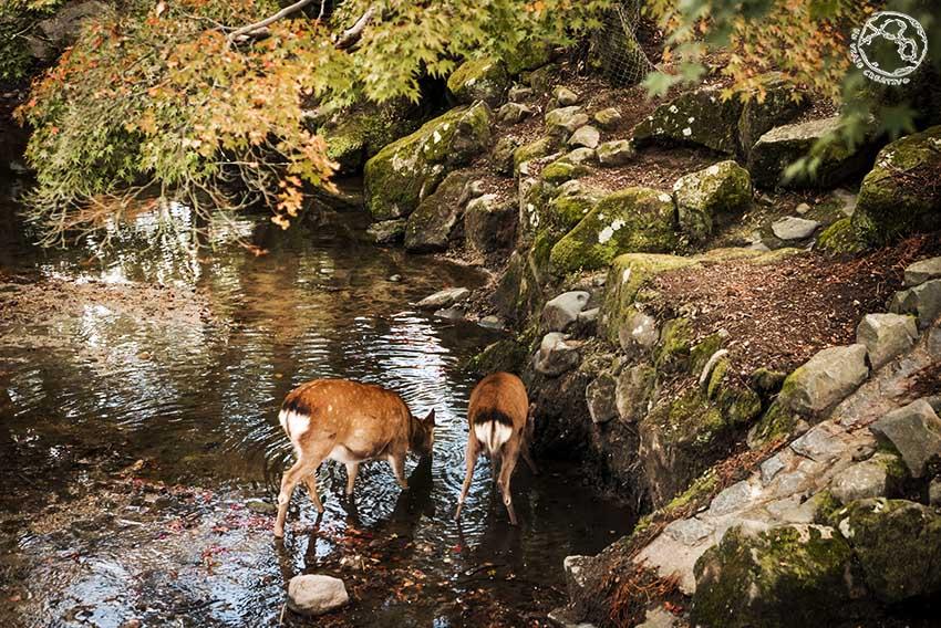 Nara y Kioto