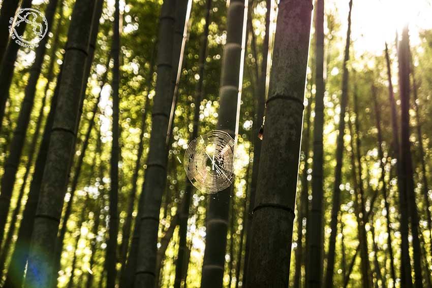 Bosque de bambu Arashiyama Tokio
