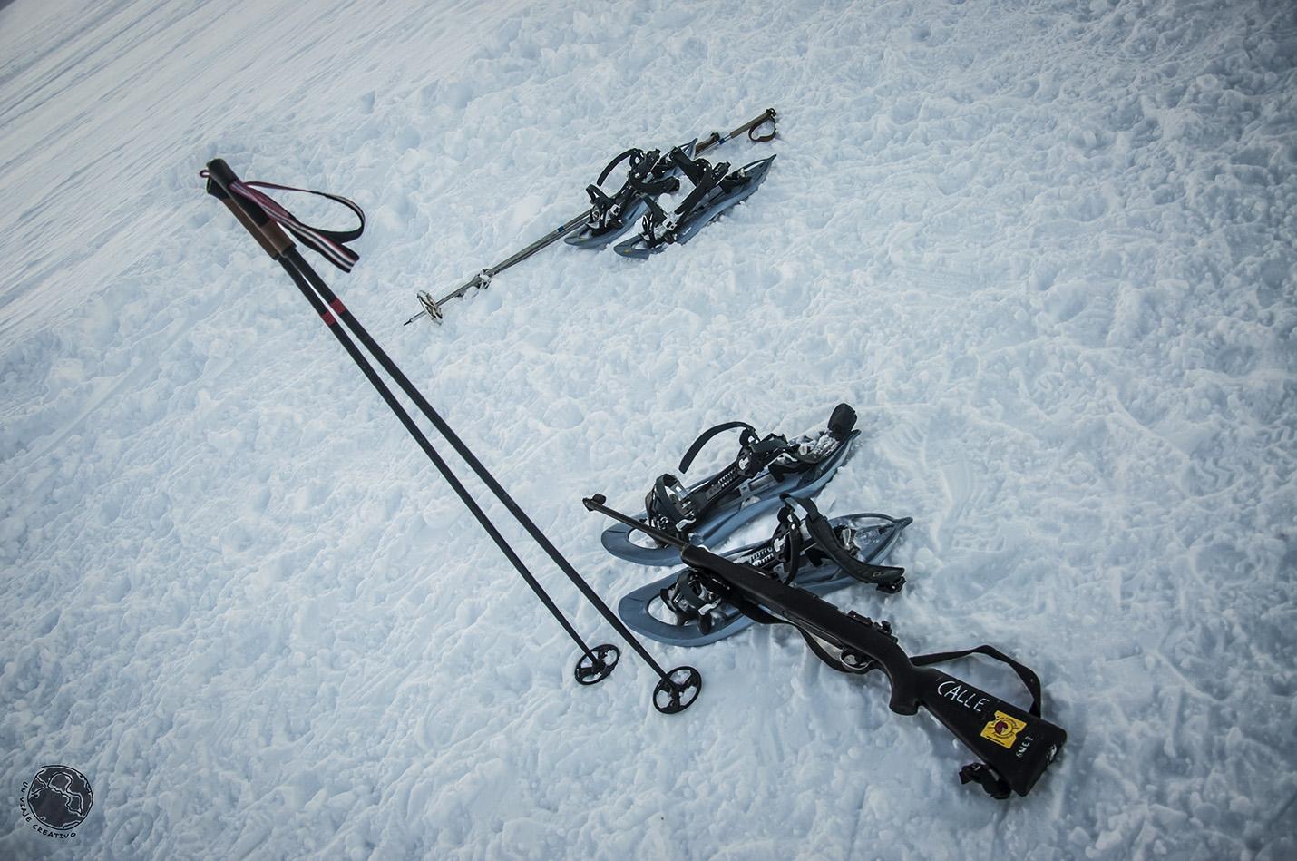 Svalbard arma