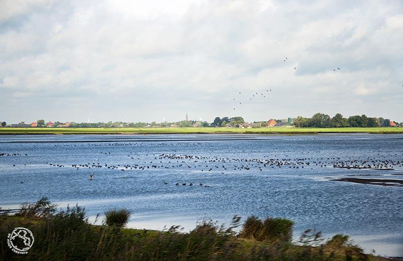 Frisia, Holanda