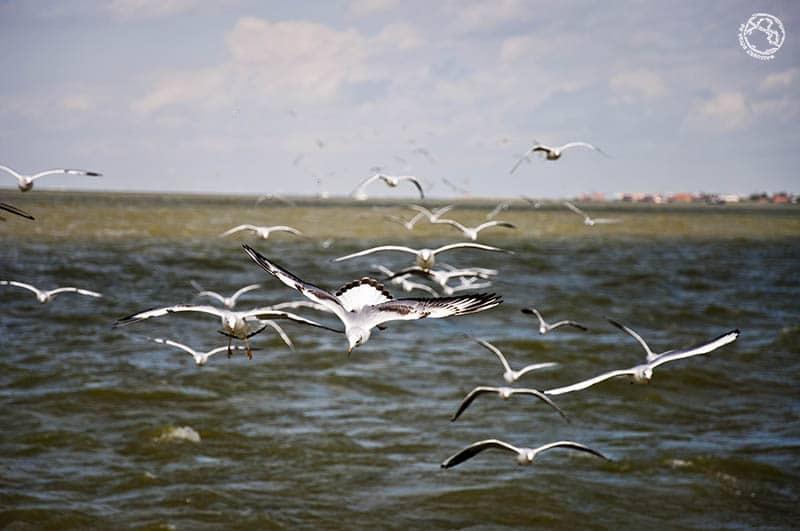 gaviotas en el mar