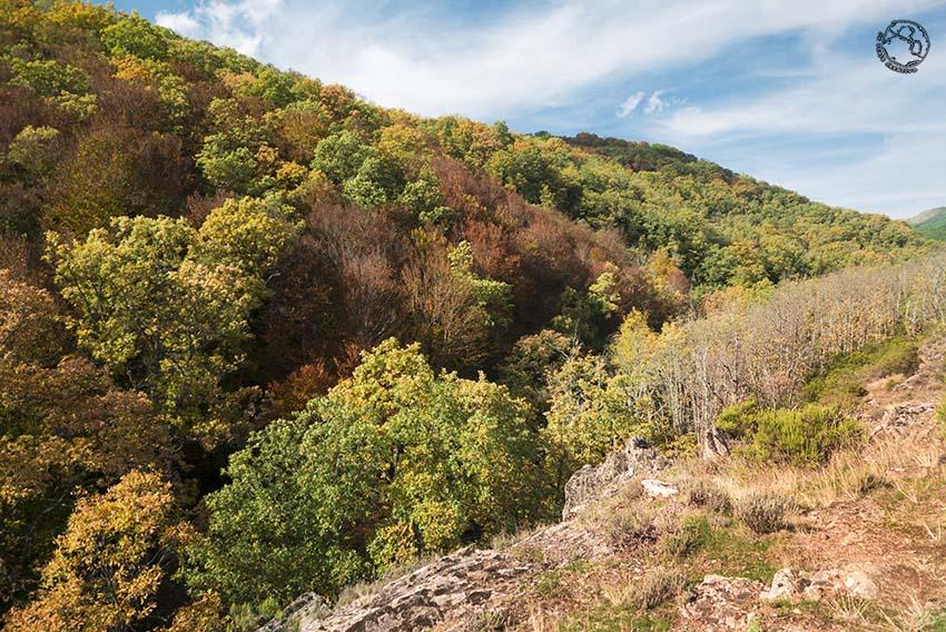 Visitar el hayedo de Montejo en otoño