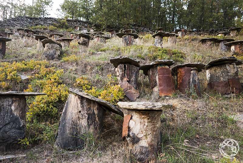 antiguos colmenares en la Hiruela