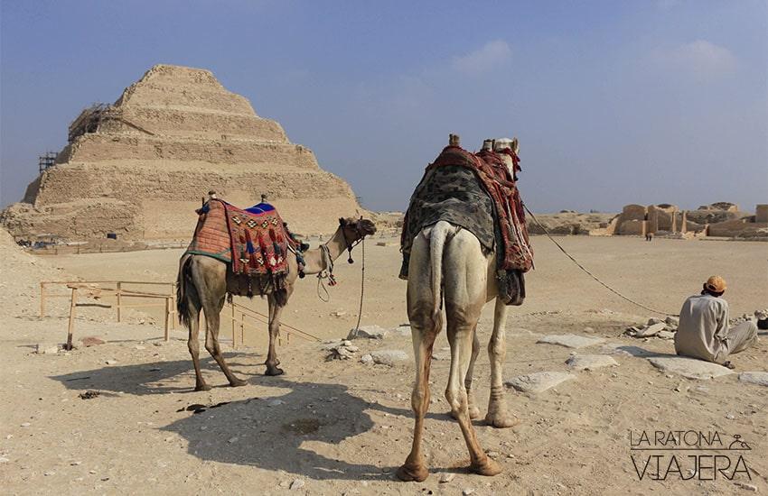 egipto-camellos