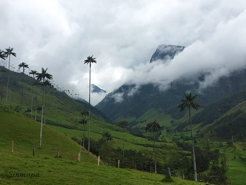 valle_cocora_colombia_vbd