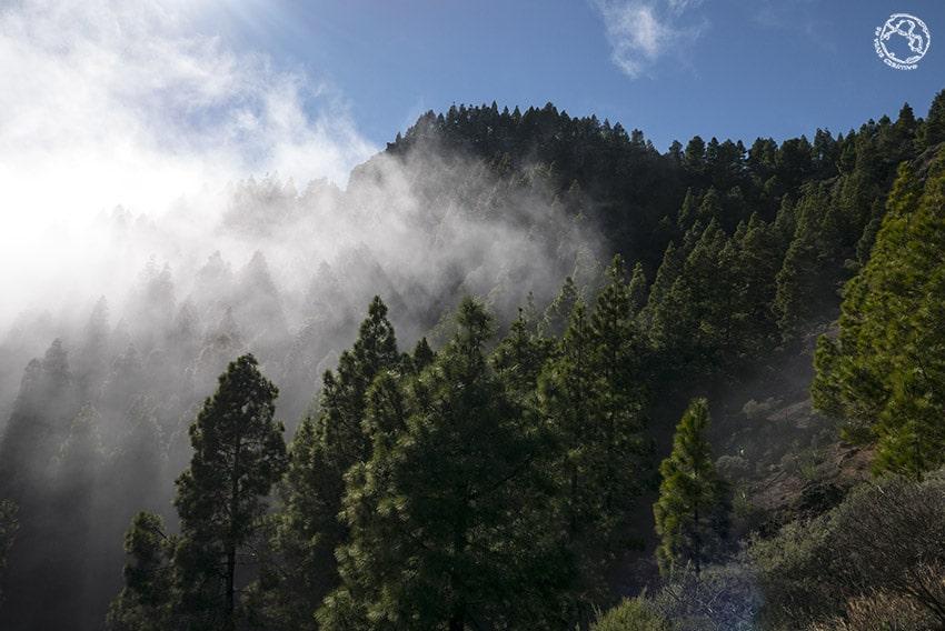 Niebla en Gran Canaria