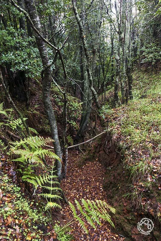 Bosque de Laurisilva, Gran Canaria