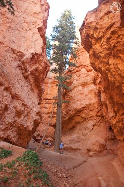 Visitar Antelope Canyon trekking Wall street