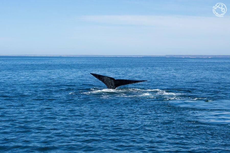 la Patagonia argentina Puerto Madryn ballenas