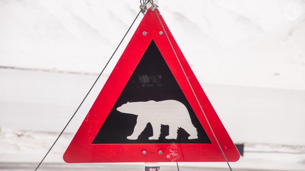 Svalbard oso polar