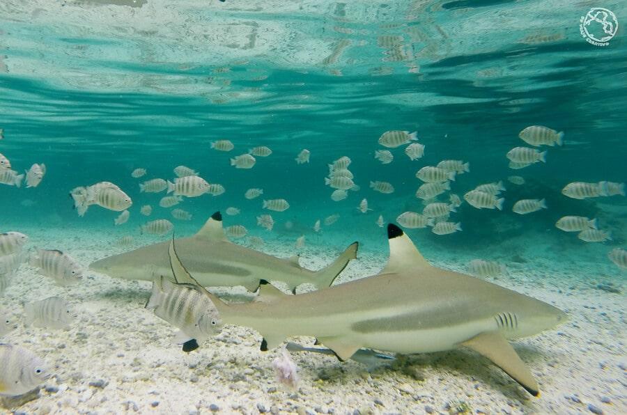 Buceo en Polinesia Francesa