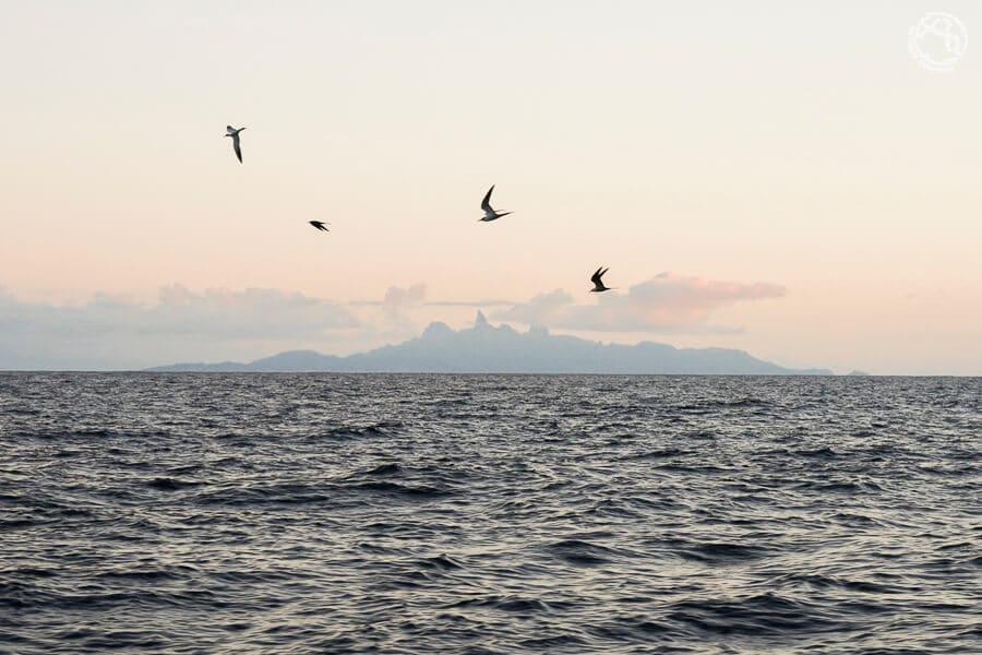 Ua Pou, islas Marquesas