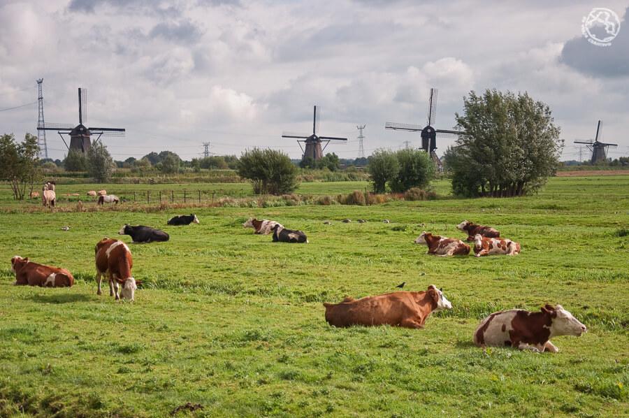 Que ver cerca de Amsterdam